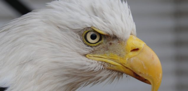 Eagles' Eye on Last Season: Auburn
